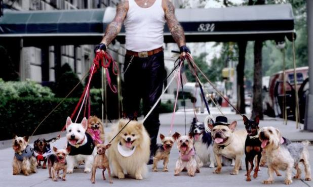 newyorkdogwalker